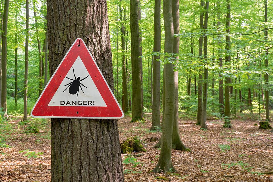 Maladie de Lyme: tout ce qu'il faut savoir pour une bonne prévention