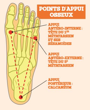 Schéma 2: Les points d'appui-osseux