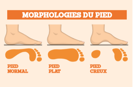 Schéma 4: la morphologie du pied