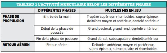 Activité musculaire selon les différentes phases